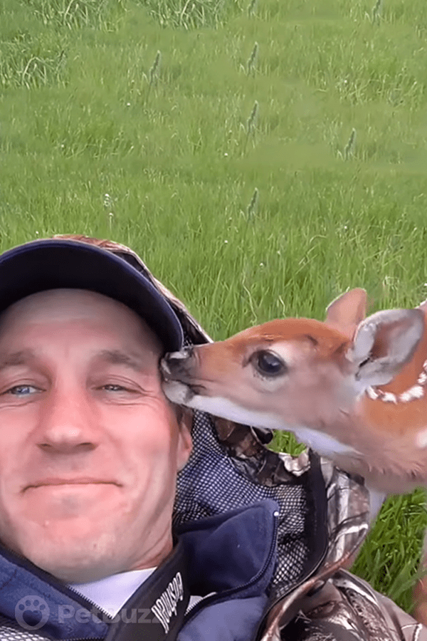49288-Pinset-Baby-Deer-Abandoned-By-Mother.-What-This-Man-Does-For-Her-Saves-Her-Life