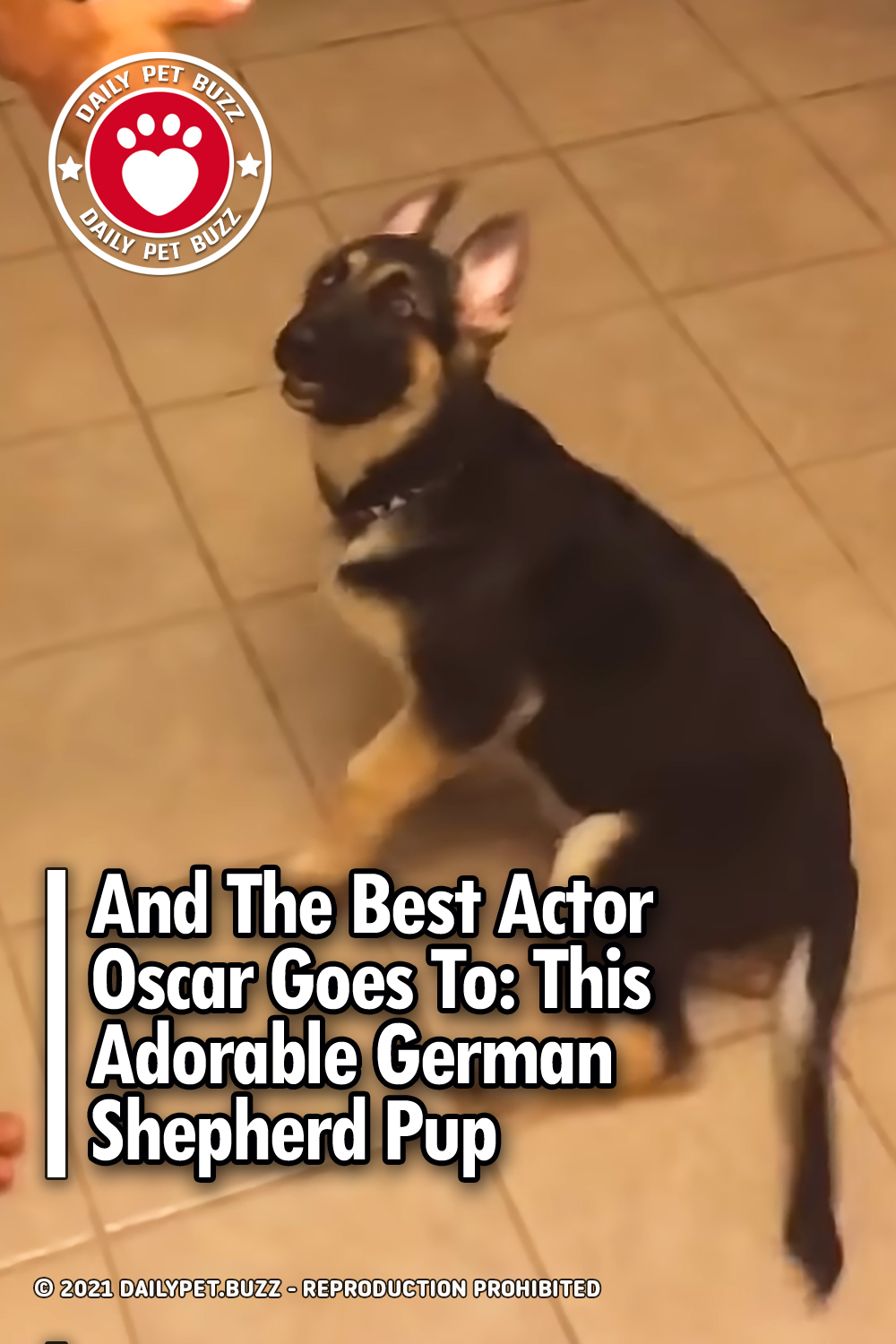 And The Best Actor Oscar Goes To: This Adorable German Shepherd Pup