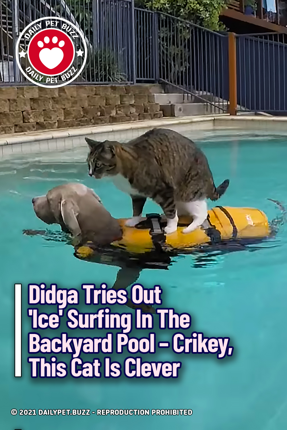 Didga Tries Out \'Ice\' Surfing In The Backyard Pool – Crikey, This Cat Is Clever