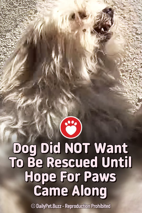 Dog Did NOT Want To Be Rescued Until Hope For Paws Came Along