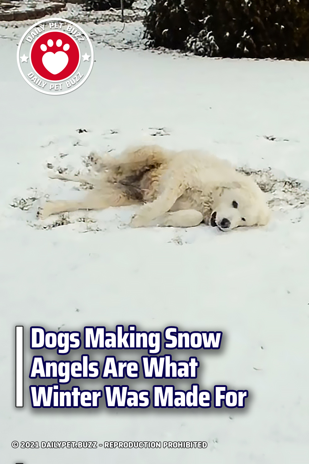 Dogs Making Snow Angels Are What Winter Was Made For