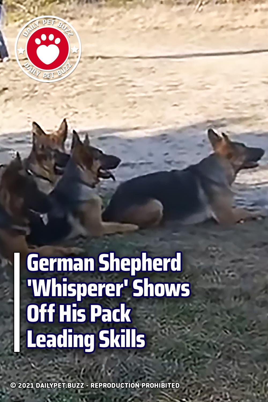 German Shepherd \'Whisperer\' Shows Off His Pack Leading Skills
