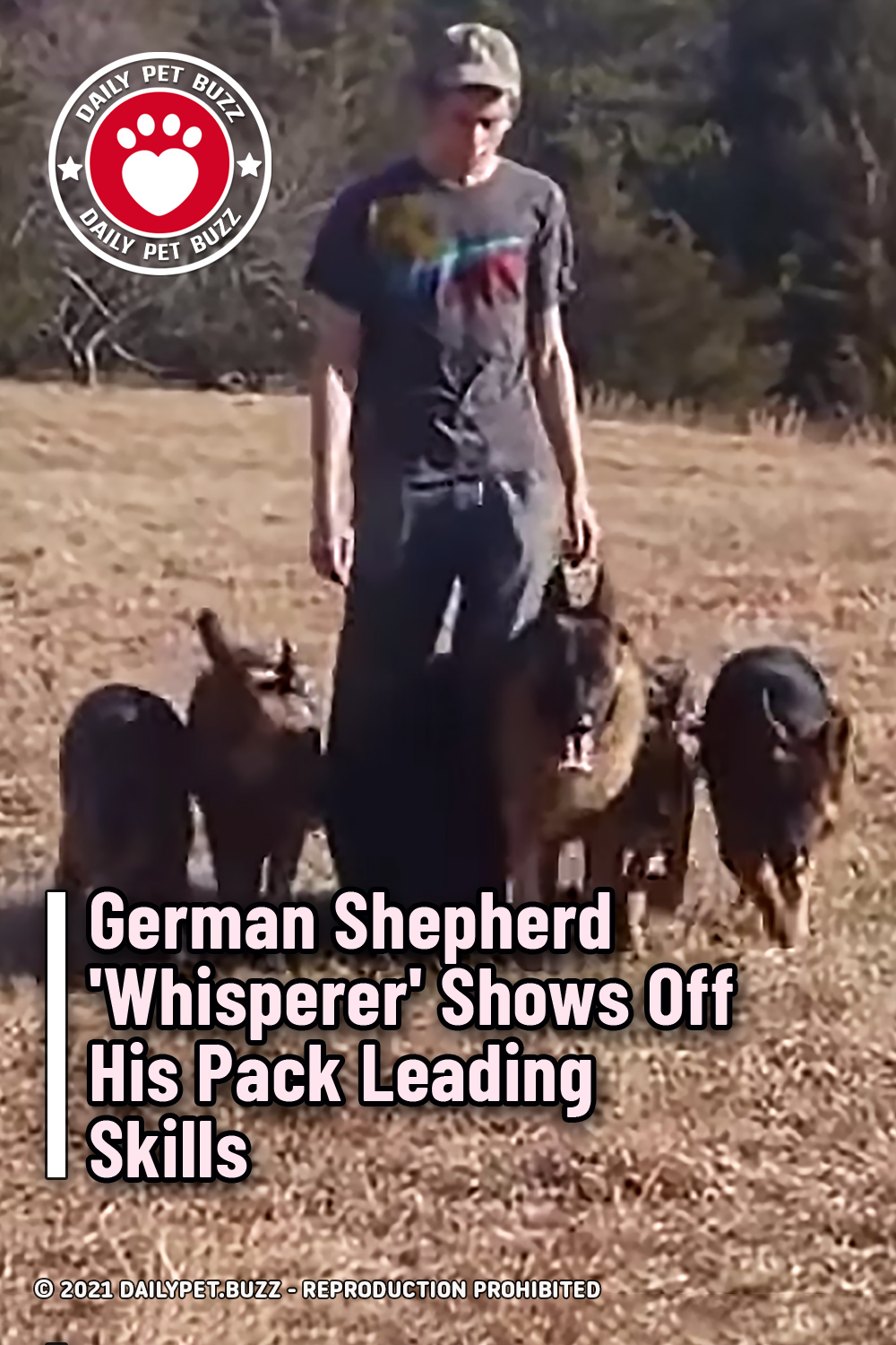 German Shepherd \'Whisperer\' Shows Off His Pack Leading Skills