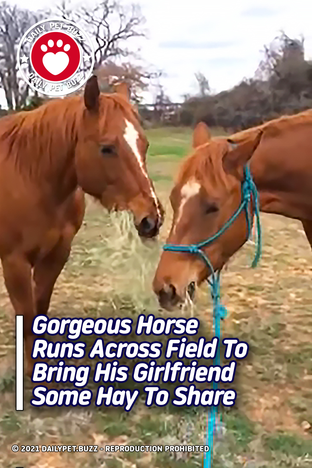 Gorgeous Horse Runs Across Field To Bring His Girlfriend Some Hay To Share
