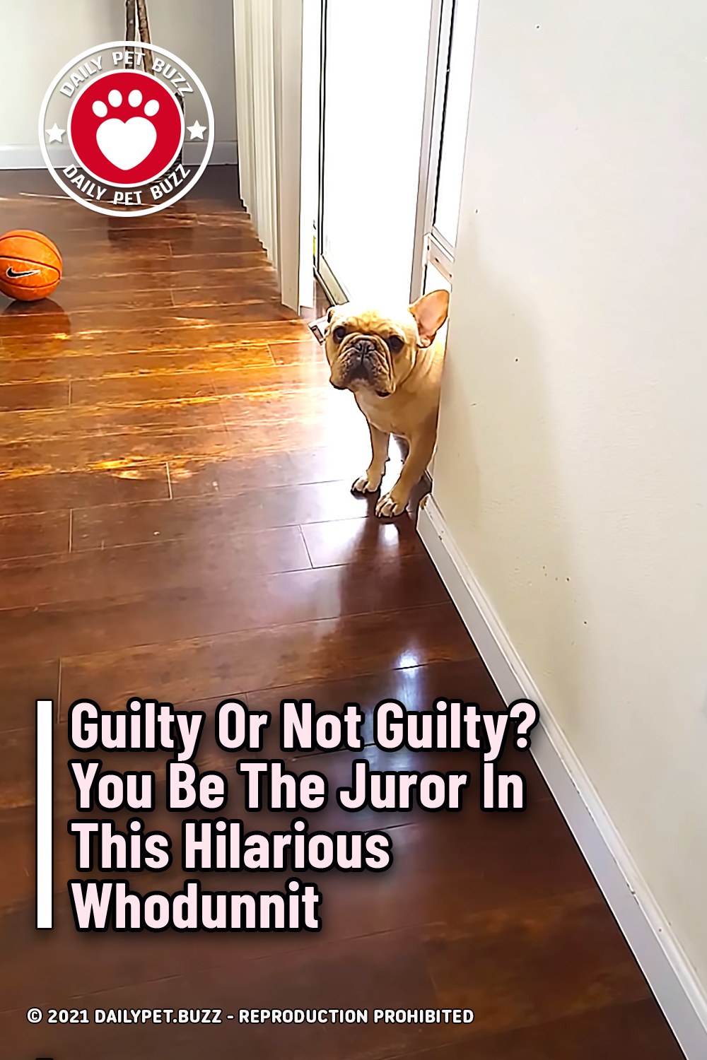 Guilty Or Not Guilty? You Be The Juror In This Hilarious Whodunnit