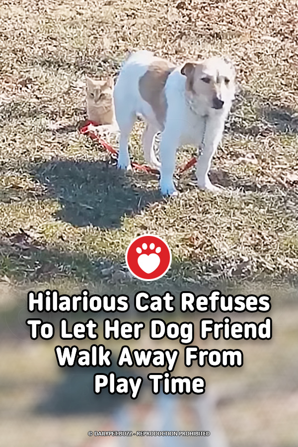 Hilarious Cat Refuses To Let Her Dog Friend Walk Away From Play Time