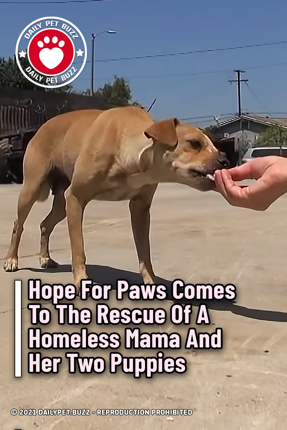 Hope For Paws Comes To The Rescue Of A Homeless Mama And Her Two Puppies