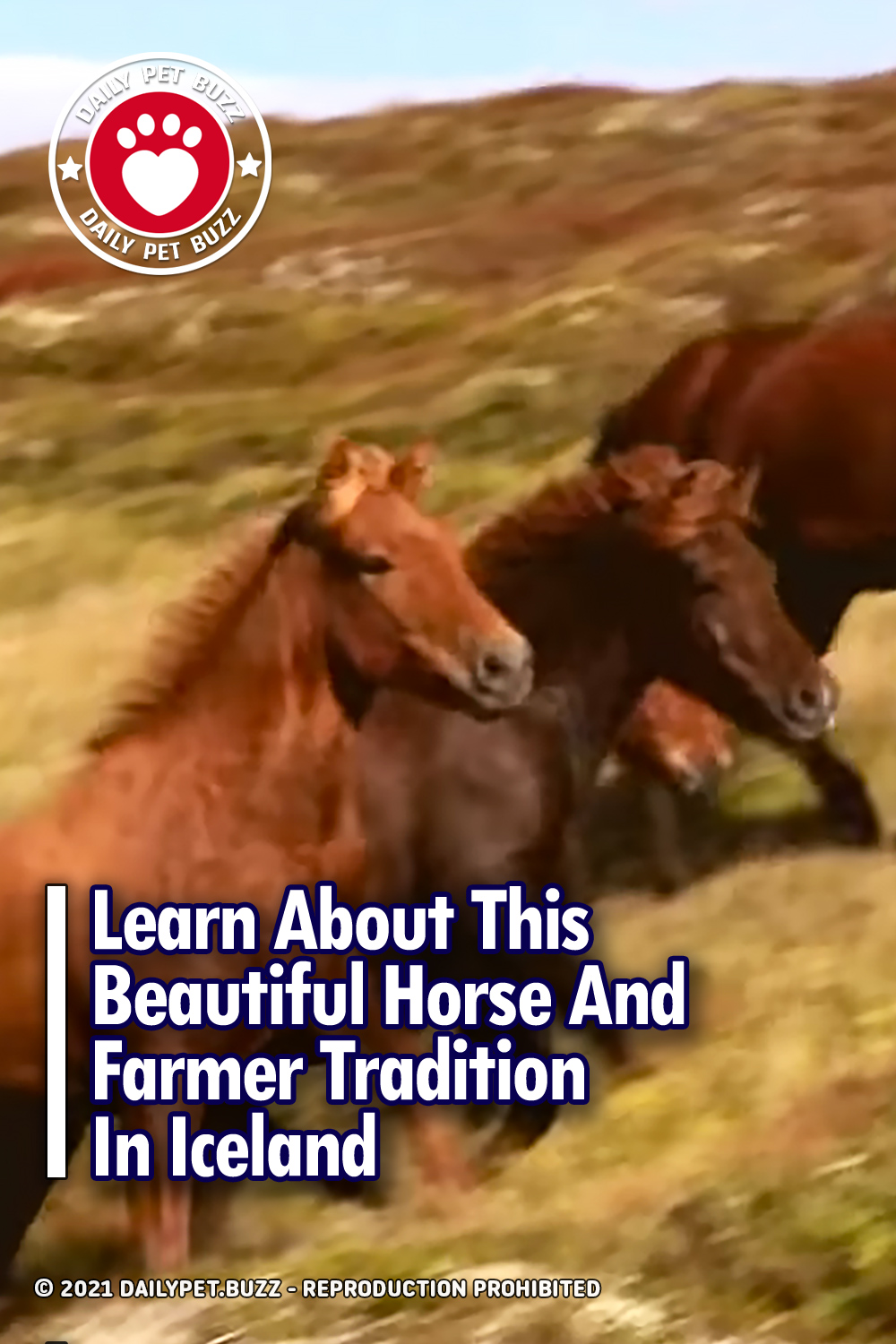 Learn About This Beautiful Horse And Farmer Tradition In Iceland