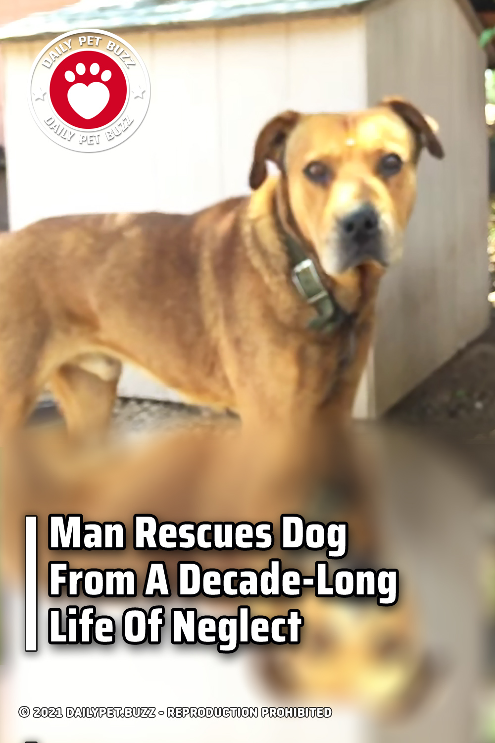 Man Rescues Dog From A Decade-Long Life Of Neglect