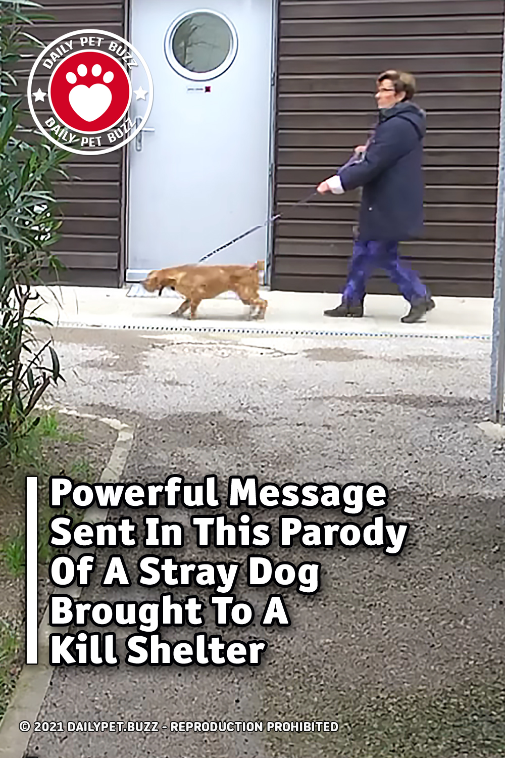 Powerful Message Sent In This Parody Of A Stray Dog Brought To A Kill Shelter