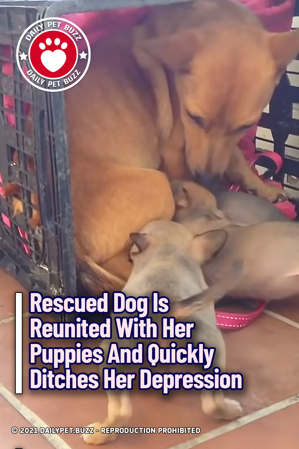 Rescued Dog Is Reunited With Her Puppies And Quickly Ditches Her Depression