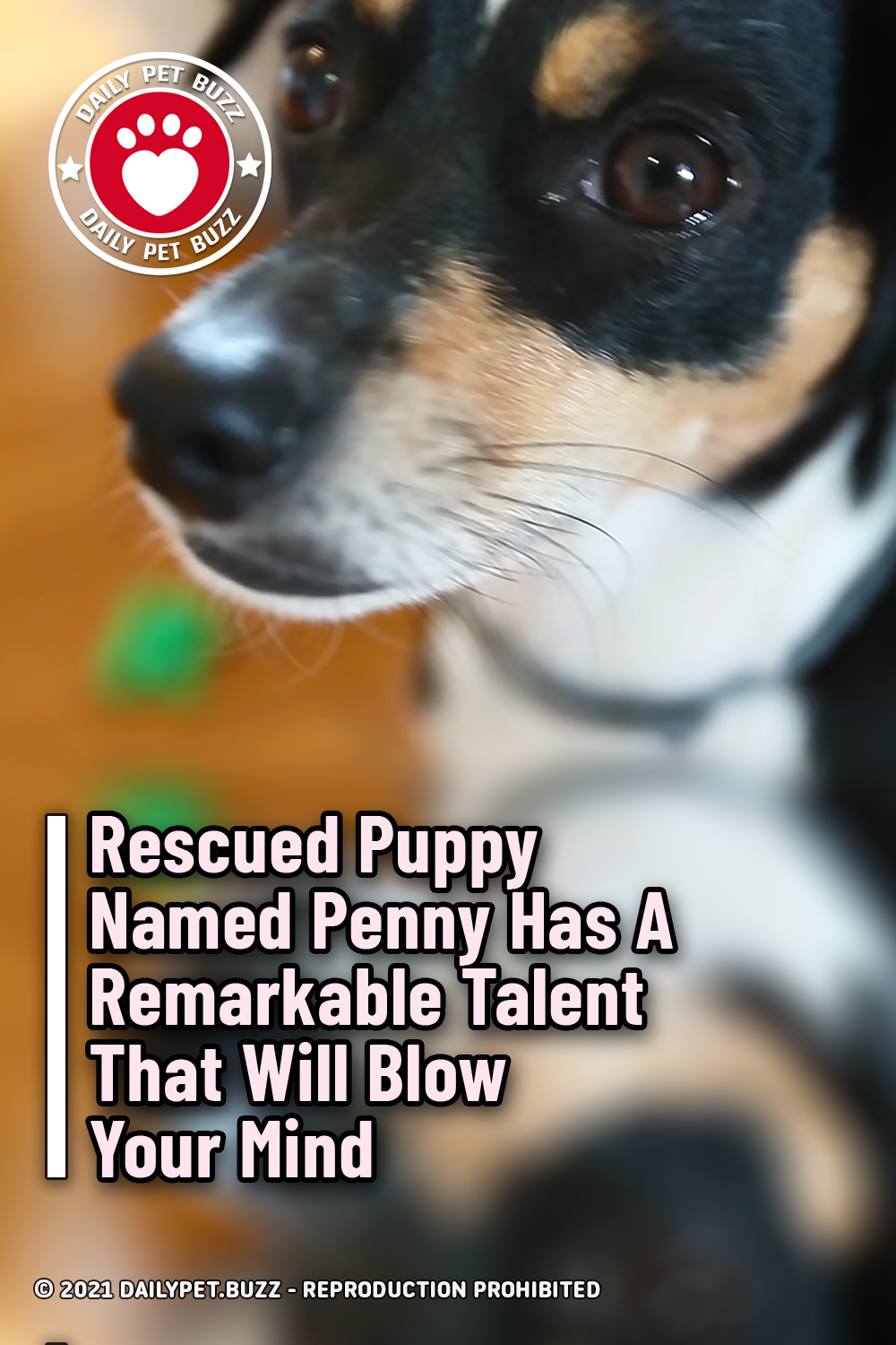 Rescued Puppy Named Penny Has A Remarkable Talent That Will Blow Your Mind