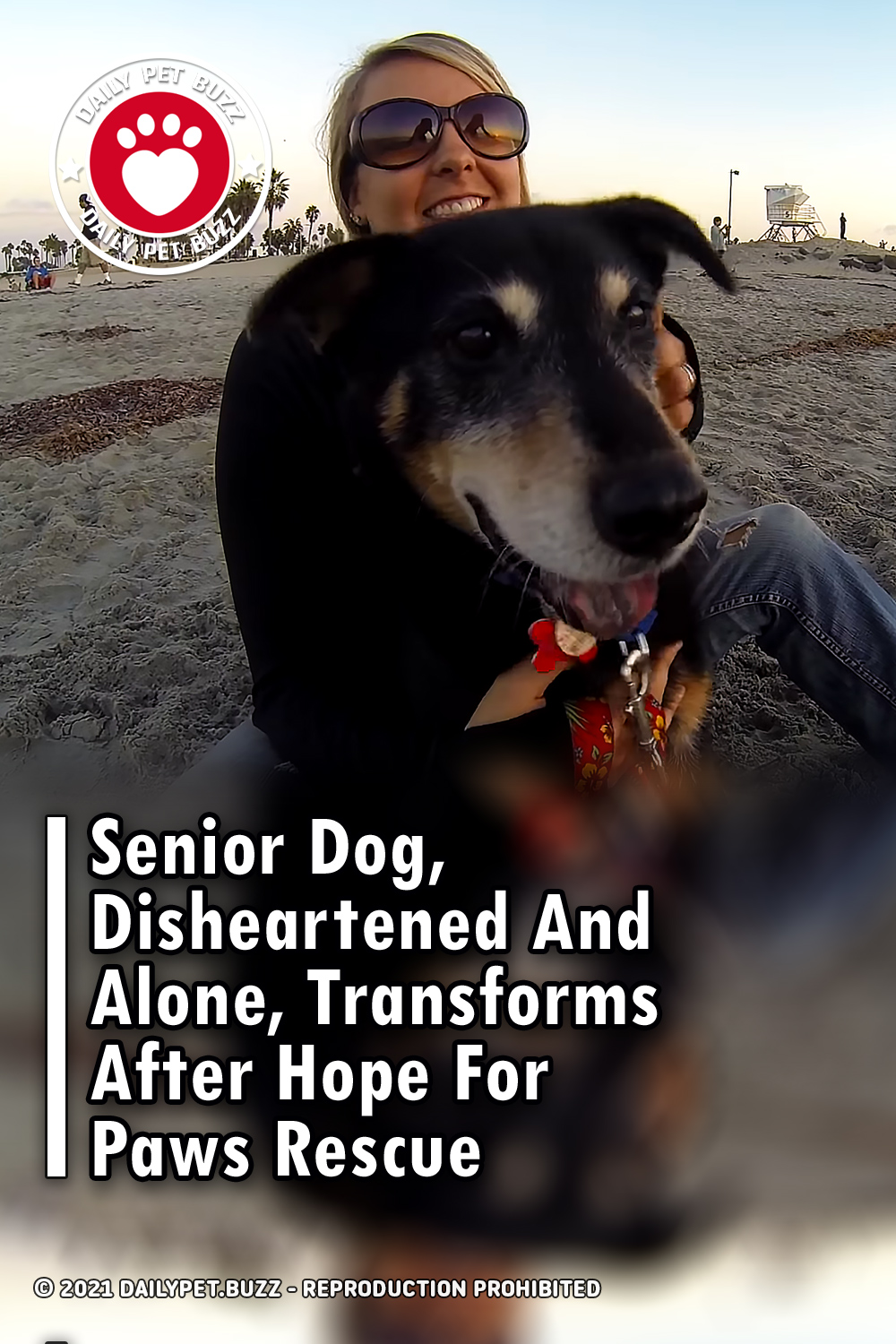 Senior Dog, Disheartened And Alone, Transforms After Hope For Paws Rescue