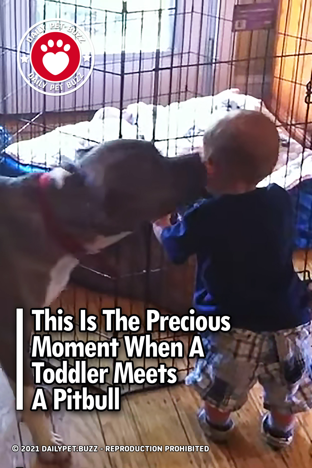 This Is The Precious Moment When A Toddler Meets A Pitbull