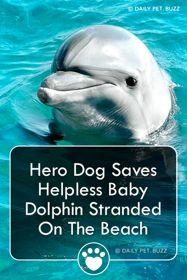 Hero Dog Saves Helpless Baby Dolphin Stranded On The Beach