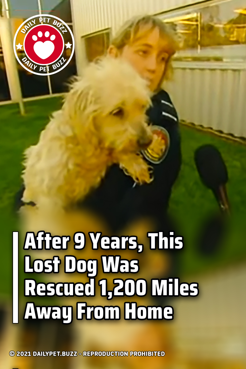After 9 Years, This Lost Dog Was Rescued 1,200 Miles Away From Home