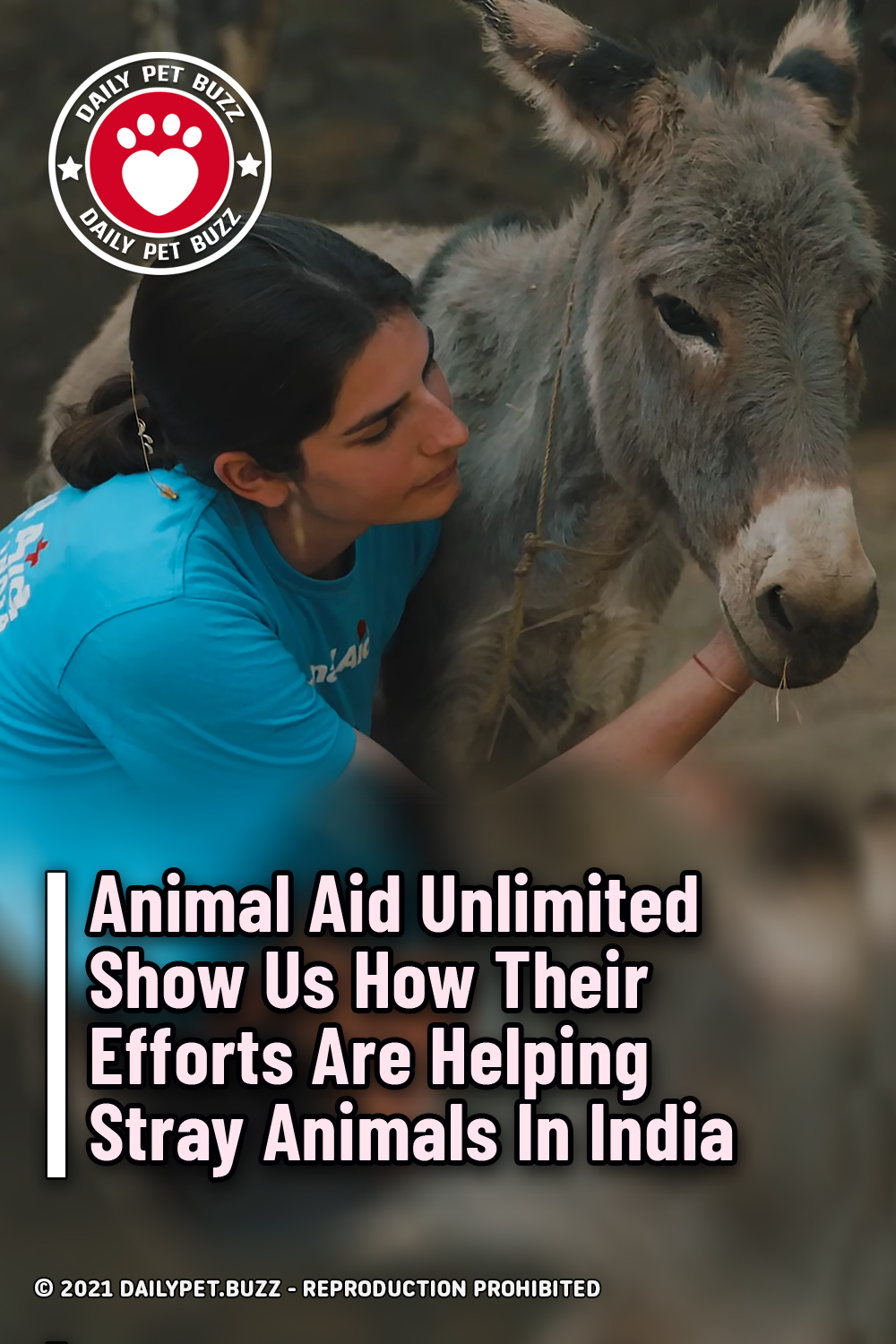 Animal Aid Unlimited Show Us How Their Efforts Are Helping Stray Animals In India