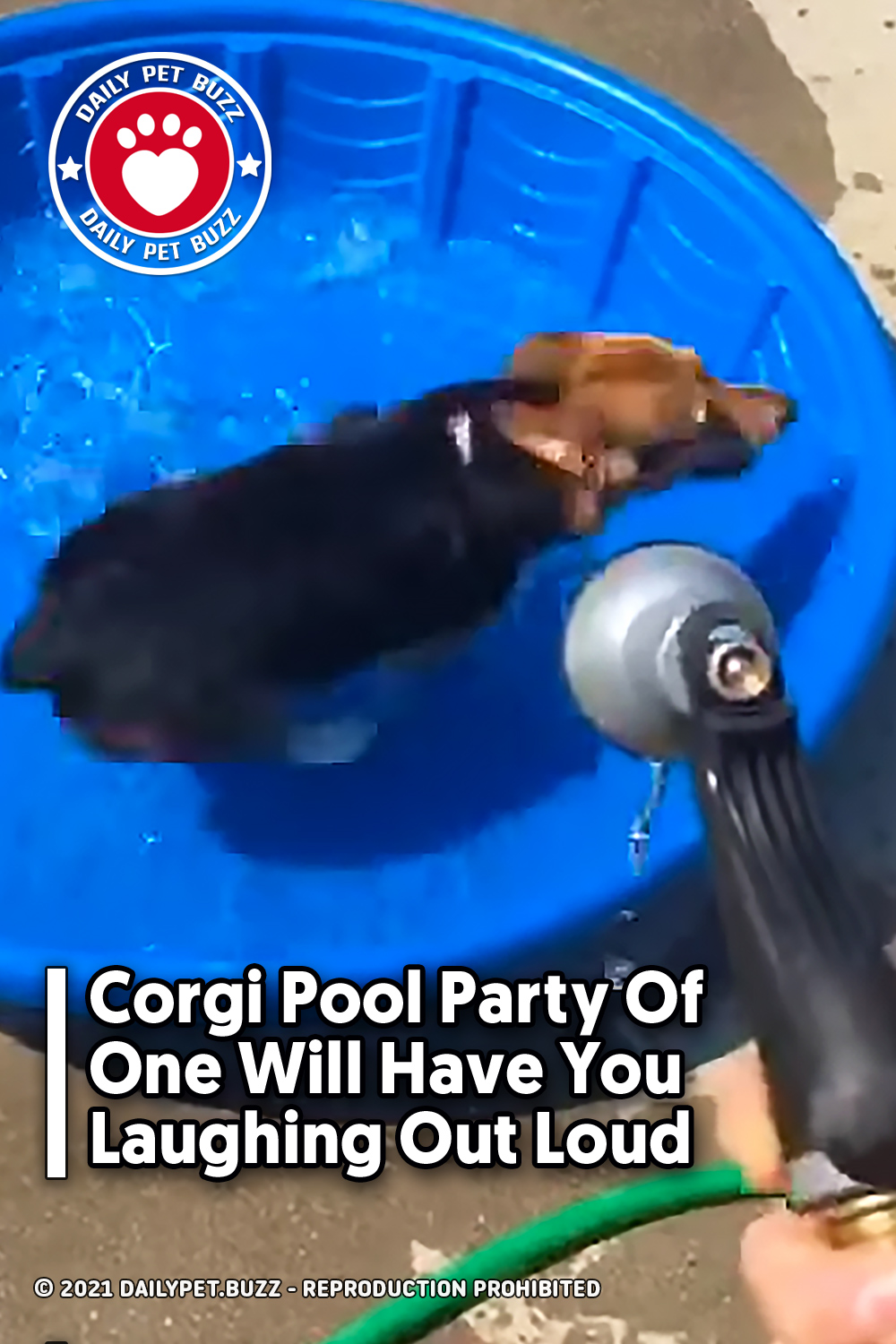 Corgi Pool Party Of One Will Have You Laughing Out Loud
