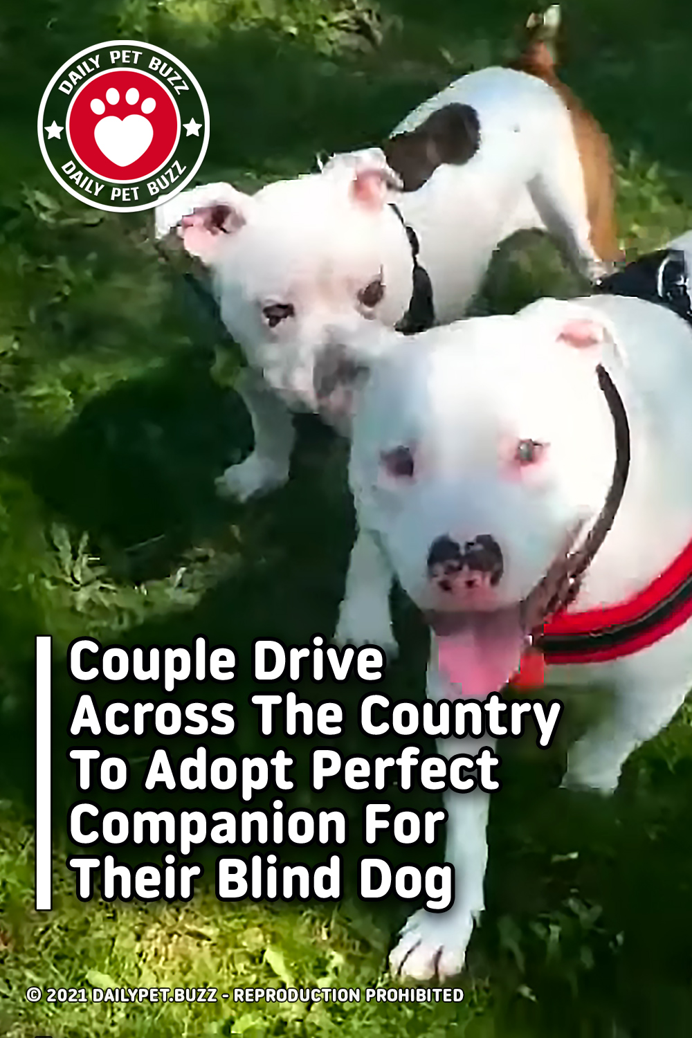 Couple Drives Across The Country To Adopt Perfect Companion For Their Blind Dog