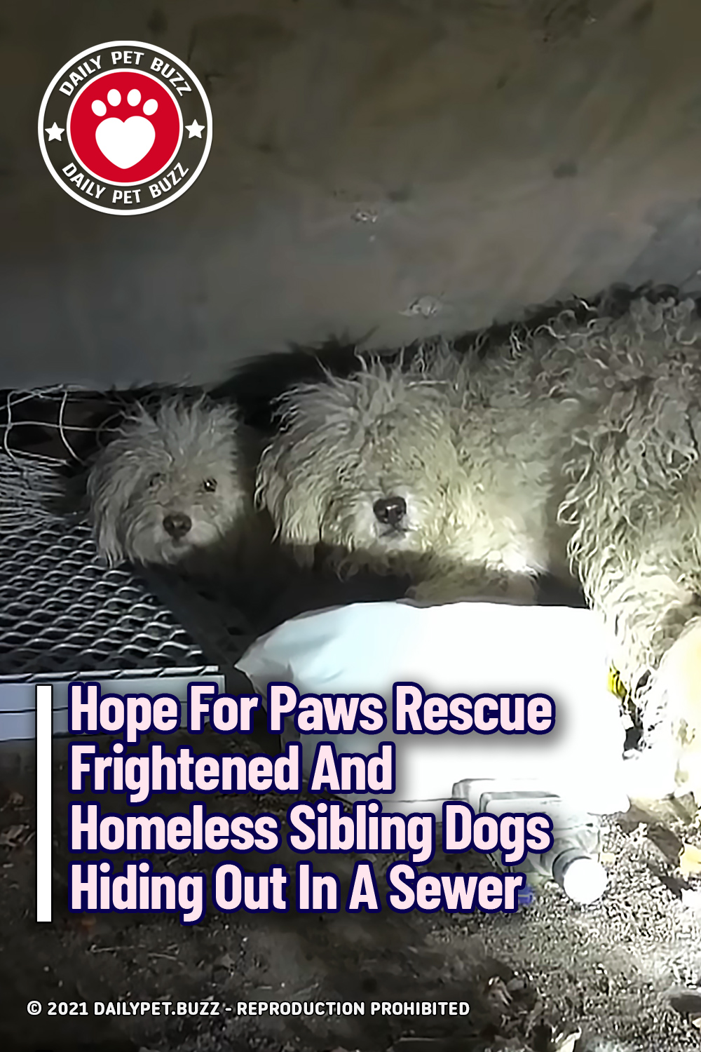 Hope For Paws Rescue Frightened And Homeless Sibling Dogs Hiding Out In A Sewer