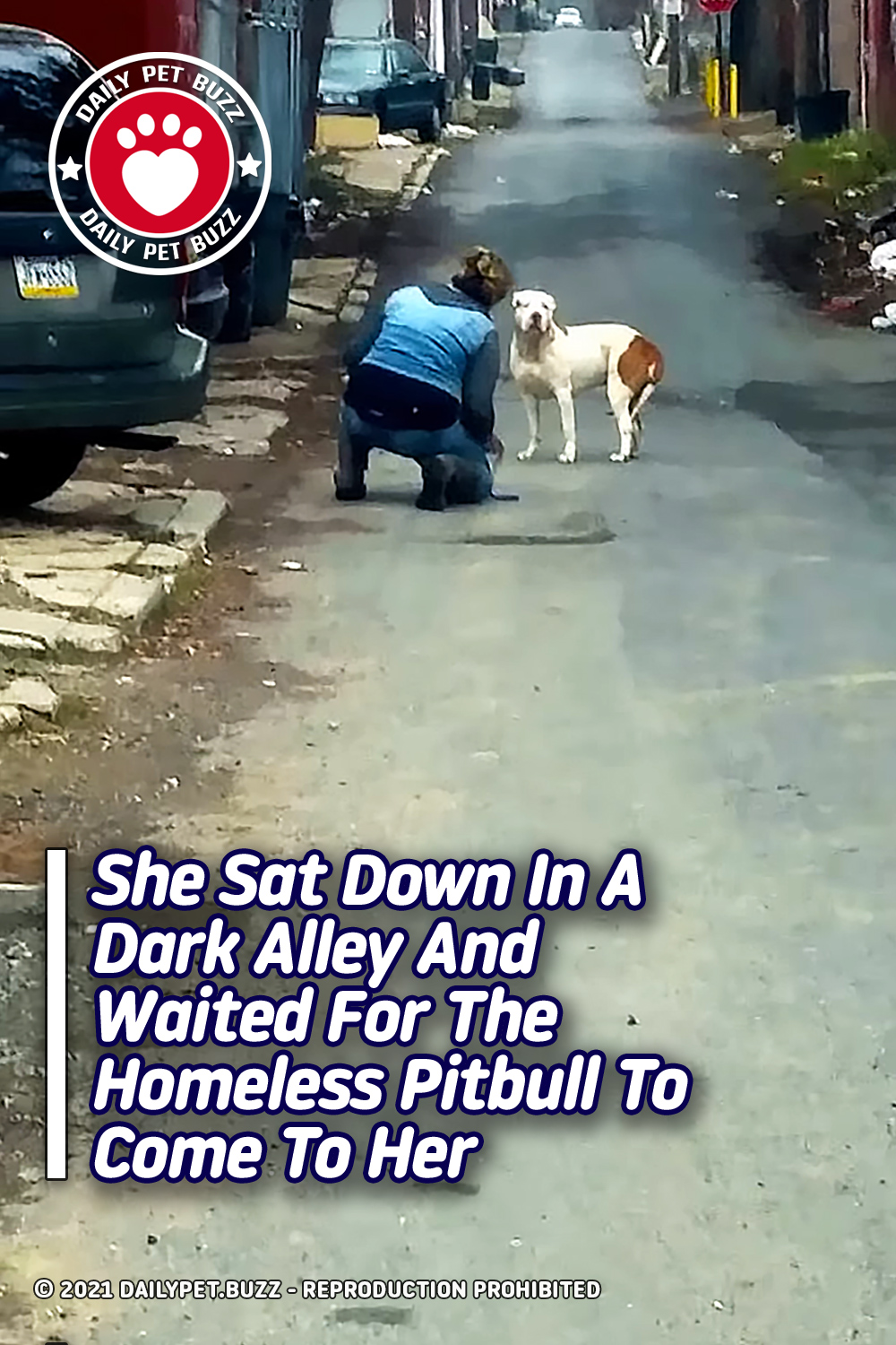 She Sat Down In A Dark Alley And Waited For The Homeless Pitbull To Come To Her