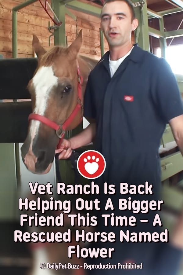 Vet Ranch Is Back Helping Out A Bigger Friend This Time – A Rescued Horse Named Flower