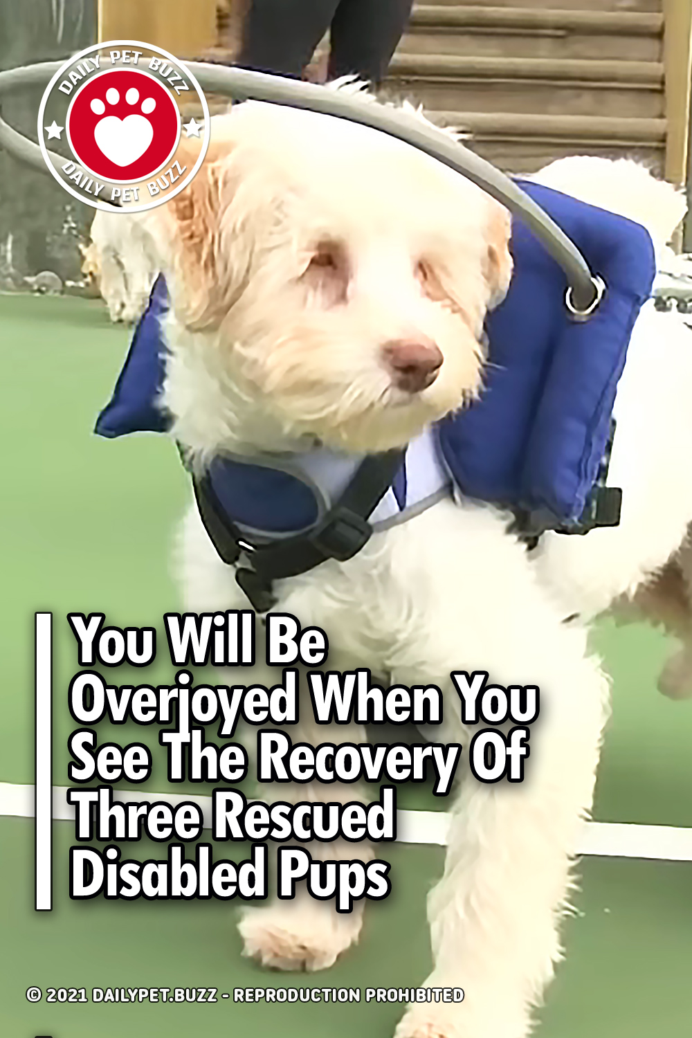 You Will Be Overjoyed When You See The Recovery Of Three Rescued Disabled Pups