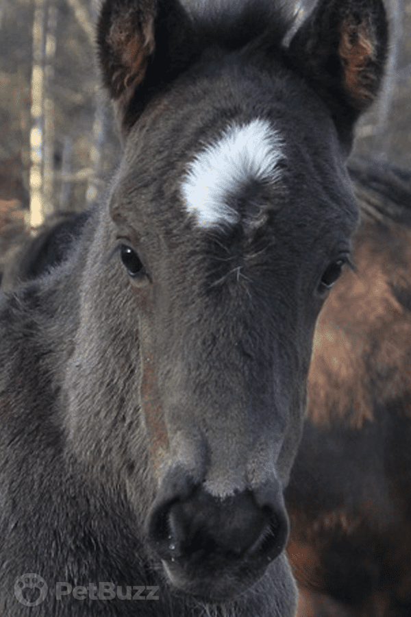 10827 Pinset Beautiful Rare Twin Foals Are Born. Four Days Later They Make A New Friend