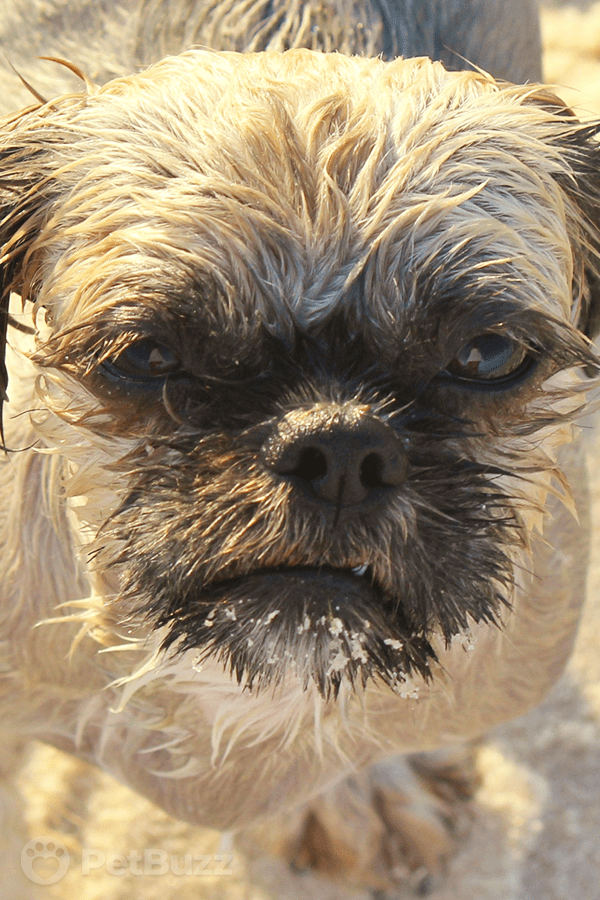 14115 Pinset Angry Wet Dog Gives His Owner A Piece Of His Mind. Watch Why He's So Mad