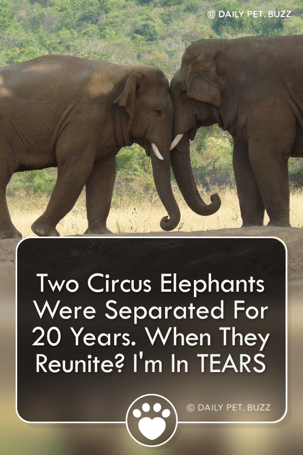 Two Circus Elephants Were Separated For 20 Years. When They Reunite? I\'m In TEARS