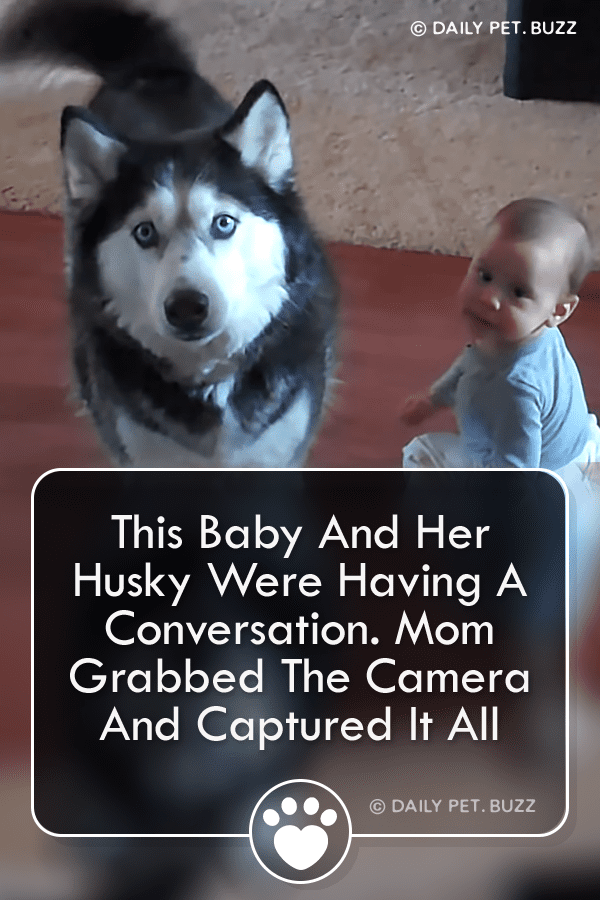 This Baby And Her Husky Were Having A Conversation. Mom Grabbed The Camera And Captured It All