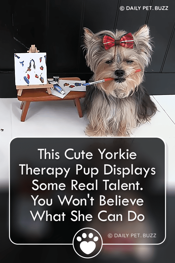 This Cute Yorkie Therapy Pup Displays Some Real Talent. You Won\'t Believe What She Can Do