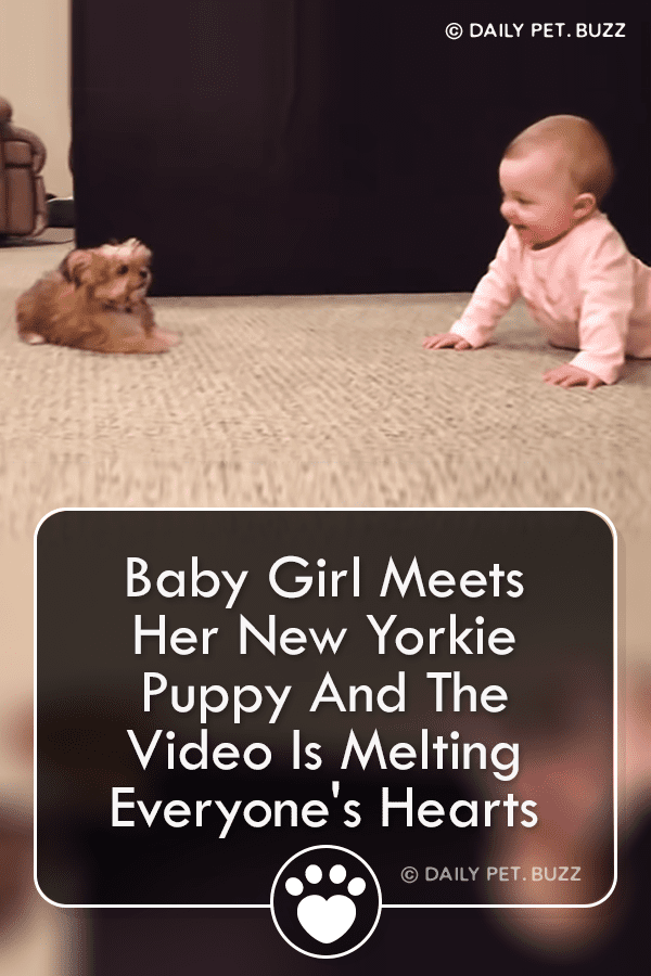 Baby Girl Meets Her New Yorkie Puppy And The Video Is Melting Everyone\'s Hearts