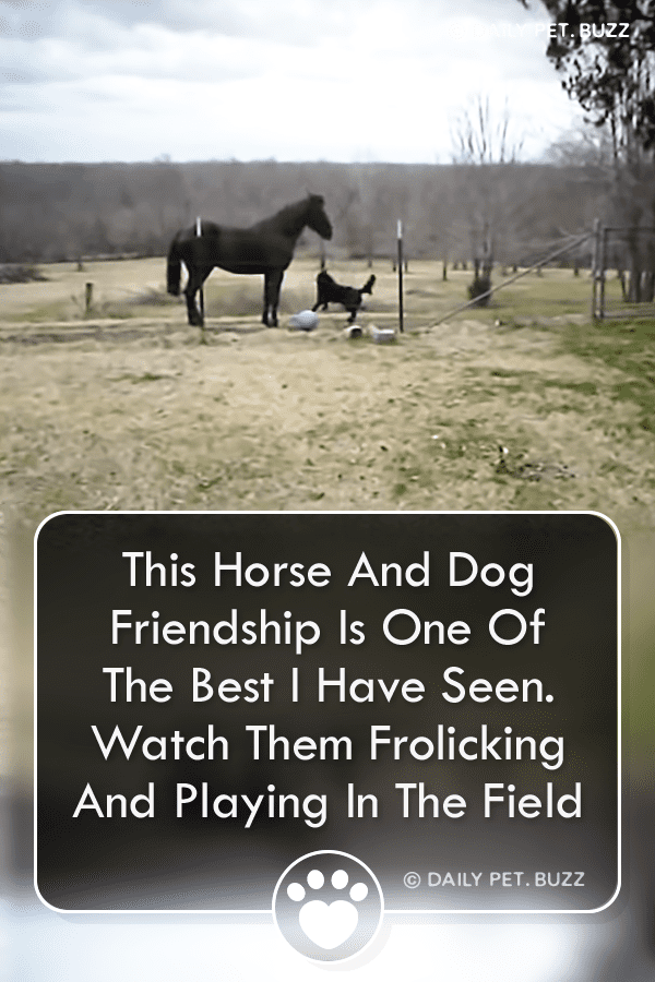 This best-friend duo is hard to beat. Watch Whiskey Brown, the horse, and Lucy, the Portugese Water Dog frolic and play in the field. They are sure to make you smile. #horse #dog #animals #pets #horses #dogs #horsevideos #dogvideos #farmanimals #animalvideos #funny #bestfriends