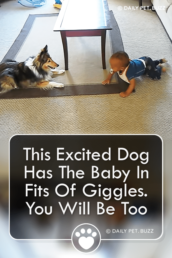 This Excited Dog Has The Baby In Fits Of Giggles. You Will Be Too
