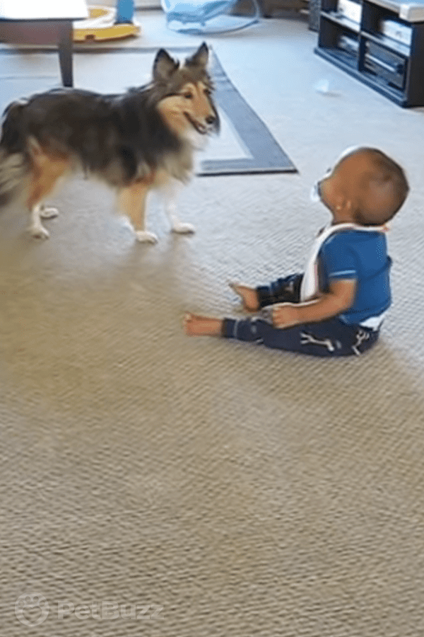 25436-Pinset-This-Excited-Dog-Has-The-Baby-In-Fits-Of-Giggles.–You-Will-Be-Too