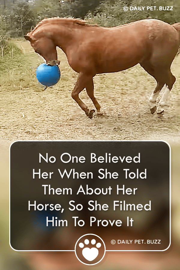 No One Believed Her When She Told Them About Her Horse, So She Filmed Him To Prove It