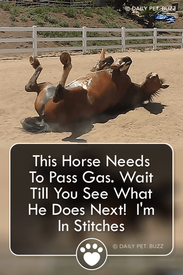 This Horse Needs To Pass Gas. Wait Till You See What He Does Next!  I\'m In Stitches