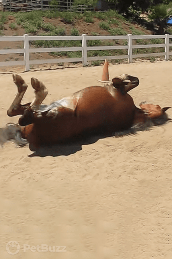 32529-Pinset-This-Horse-Needs-To-Pass-Gas.-Wait-Till-You-See-What-He-Does-Next!–I'm-In-Stitches