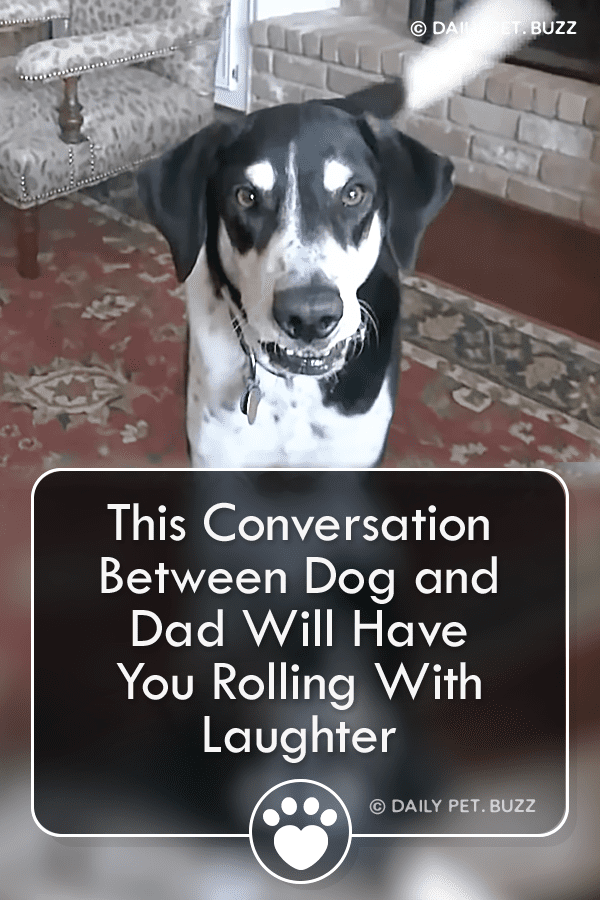 This Conversation Between Dog and Dad Will Have You Rolling With Laughter