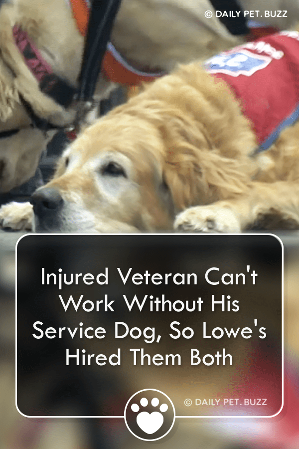 Injured Veteran Can\'t Work Without His Service Dog, So Lowe\'s Hired Them Both