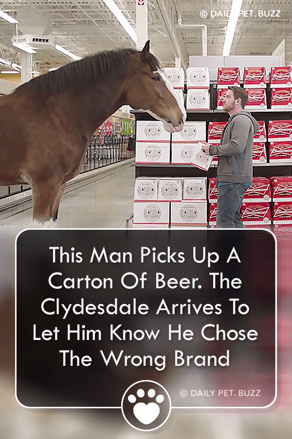 This Man Picks Up A Carton Of Beer. The Clydesdale Arrives To Let Him Know He Chose The Wrong Brand