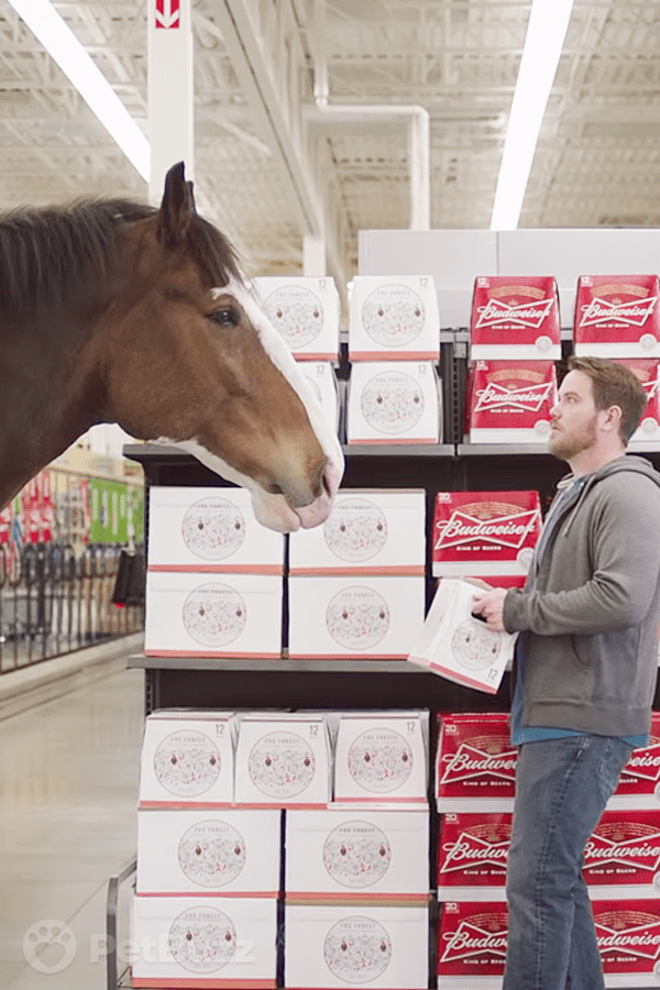 42684-Pinset-This-Man-Picks-Up-A-Carton-Of-Beer.-The-Clydesdale-Arrives-To-Let-Him-Know-He-Chose-The-Wrong-Brand