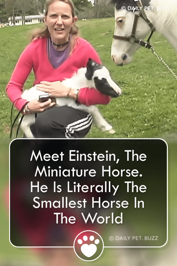 Meet Einstein, The Miniature Horse. He Is Literally The Smallest Horse In The World