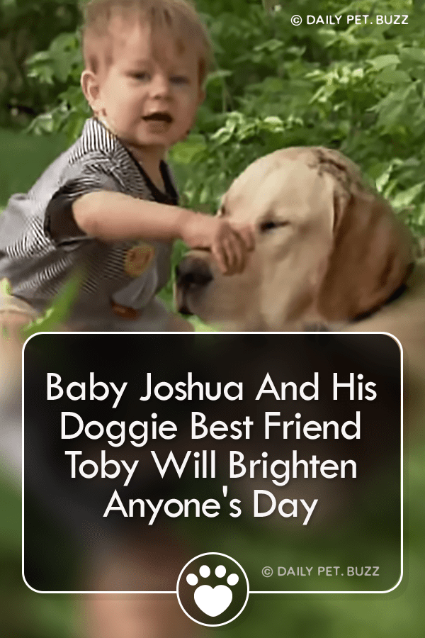 Baby Joshua And His Doggie Best Friend Toby Will Brighten Anyone\'s Day