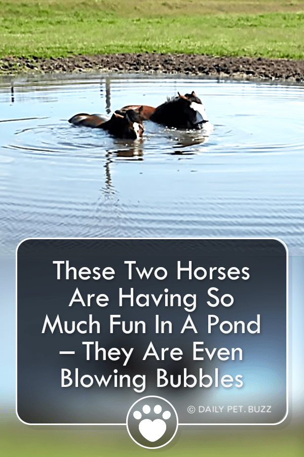 These Two Horses Are Having So Much Fun In A Pond – They Are Even Blowing Bubbles