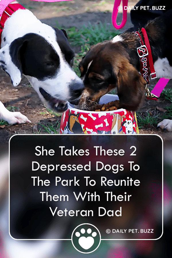 She Takes These 2 Depressed Dogs To The Park To Reunite Them With Their Veteran Dad