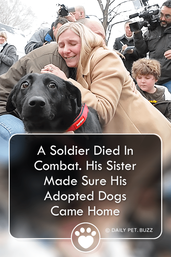 A Soldier Died In Combat. His Sister Made Sure His Adopted Dogs Came Home