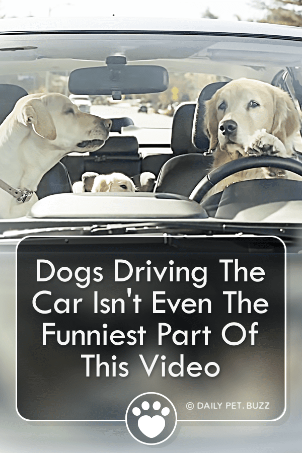 Dogs Driving The Car Isn\'t Even The Funniest Part Of This Video