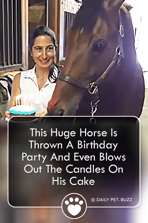 This Huge Horse Is Thrown A Birthday Party And Even Blows Out The Candles On His Cake